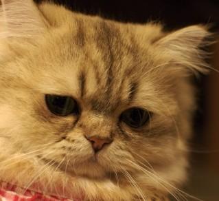 無気力なネコ