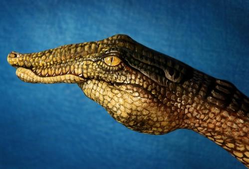 Crocodile2-499x340